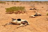 UN: Somalia has two months to avert drought catastrophe