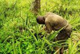 UN: Millions facing starvation in Democratic Republic of Congo